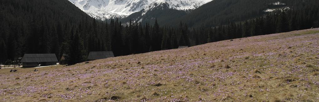 Jak skanować negatywy Kamienna Góra