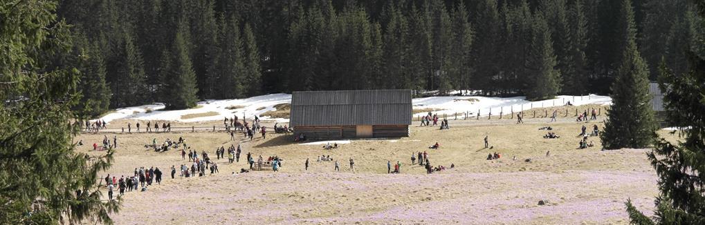 Wywoływanie zdjęć przez internet Jelenia Góra