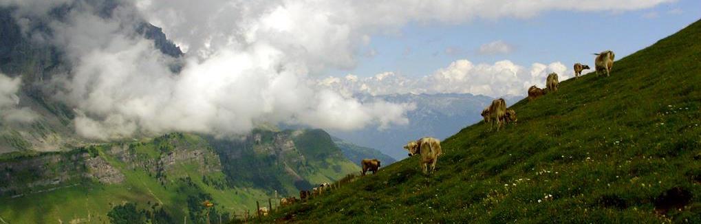 Zdjęcia z retuszem Jelenia Góra